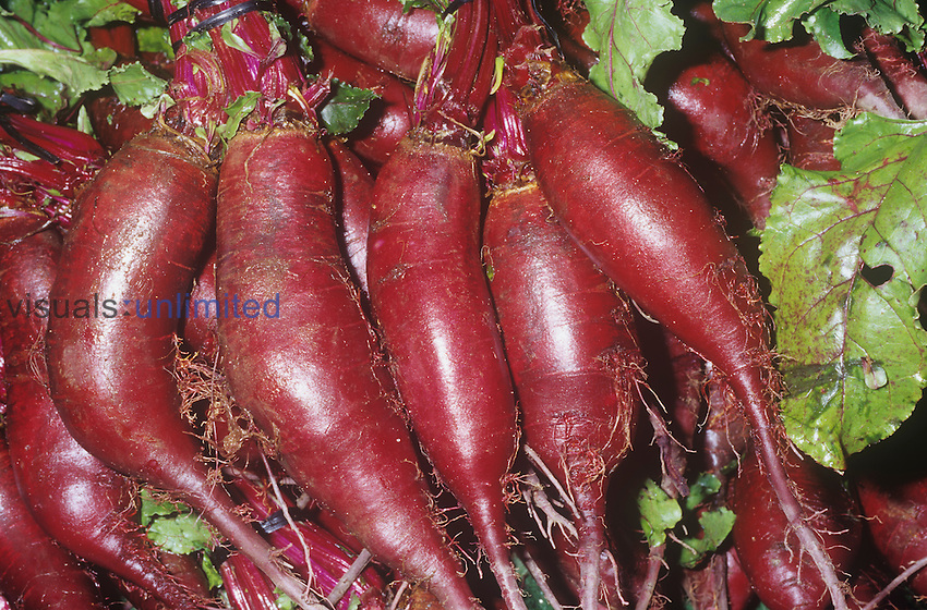 Beet, Italian Style (Beta vulgaris) native to Southern Europe and Western Asia.
