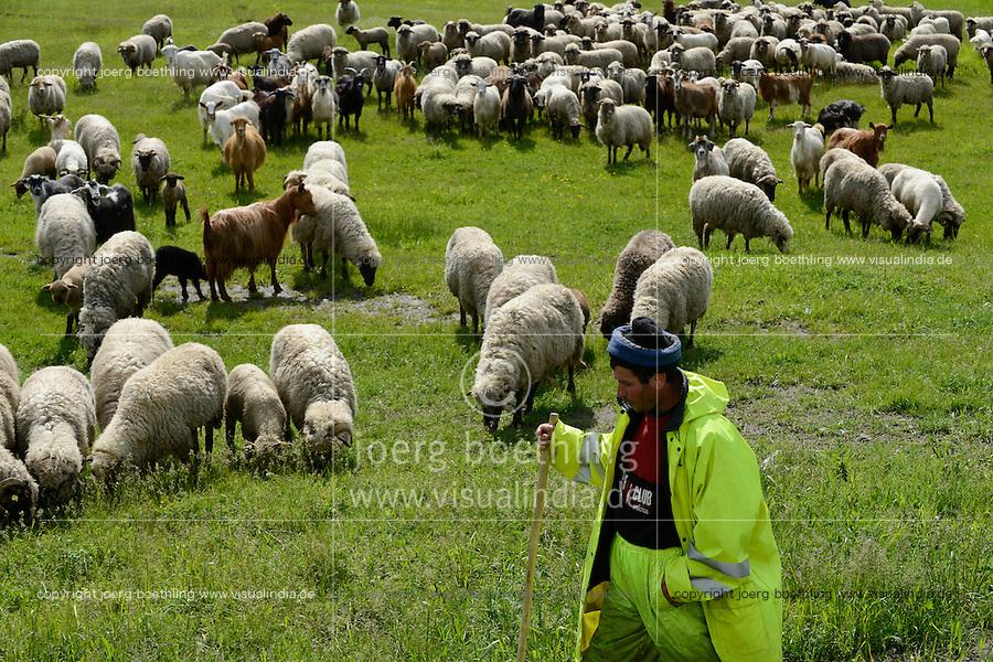 ROMANIA Filipestii de Padure, shepherd with sheeps  / RUMAENIEN Filipestii de Padure bei Ploiesti, Schaefer mit Schafherde