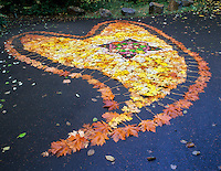 Fall leaf art design in parking lot on Quartzville Creek, Oregon