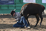 chute dogging/steer wrestling