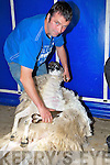 Head and shoulders of Tom O'Donnell (jnr) shearing ...........