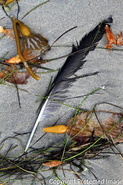 Kelp Grass Feather