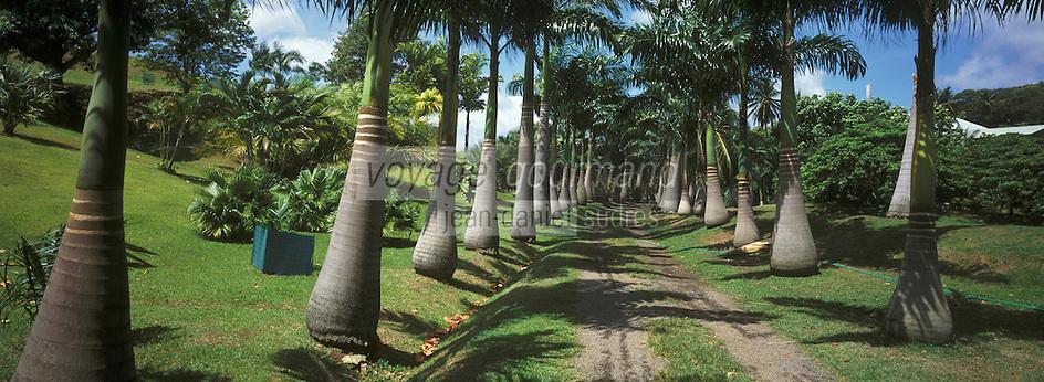 France/DOM/Martinique/Le François/Domaine de l'Acajou/Distillerie Clément: Habitation Clément et les cocotiers du jardin
