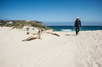 Person walks near jouvenile Elephant Seals on Cuyler Harbor beach, San Miguel Islands, Channel Islands National Park, California