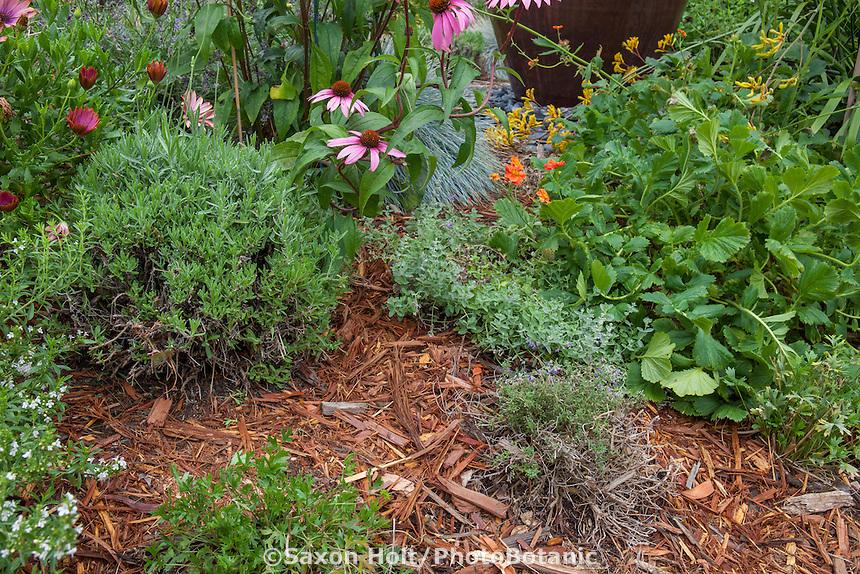 Bark mulch between perennials in California garden for water conservation