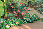 A profusion of bright pink fuschia  blooms adds a pop of color to this tropical garden.
