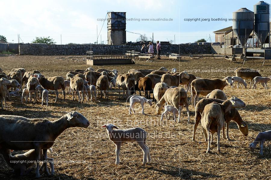 SPAIN Mallorca, Es Llombards, sheep breeding / SPANIEN Mallorca, Es Llombards, Schafhaltung