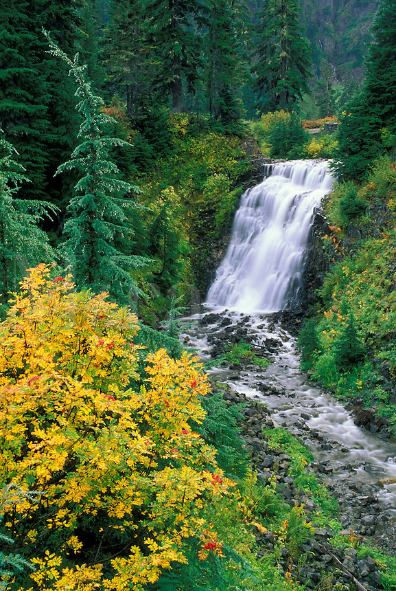 Waterfall and mountain ash bush, Mount Baker Highway, North Cascades, Washington