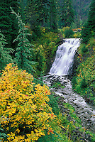 Waterfall and mountain ash bush, Mount Baker Highway, North Cascades, Washington