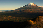 Aokigahara Jukai, better known as the Mt. Fuji suicide forest, sprawls beneath Mount Fuji in Yamanashi Prefecture, west of Tokyo, Japan on 03 Nov. 2009. PHOTOGRAPHER: ROB GILHOOLY