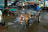 Indonesia, Sulawesi, Manado. The market in Manado harbour. Horse transport.