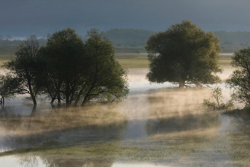 Flooded trees: mainly white willow (Salix alba). Livansko Polje -  karst plateau, is arguably the largest karst field in the world. Ramsar site. May 2009. Bosnia-Herzegovina.<br /> Elio della Ferrera / Wild Wonders of Europe