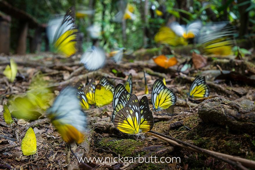 Animal,Animals,Wildlife,Arthropod,Arthropods,Invertebrate