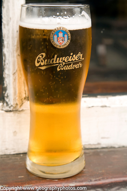 Budweiser Budvar pint glass of beer