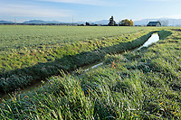 Agricultural canal through field, Mount Vernon, Skagit Valley, Skagit County, Washington, USA