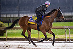 November 1, 2018: Abel Tasman, trained by Bob Baffert, exercises in preparation for the Breeders' Cup Distaff at Churchill Downs on November 1, 2018 in Louisville, Kentucky. Alex Evers/Eclipse Sportswire/CSM