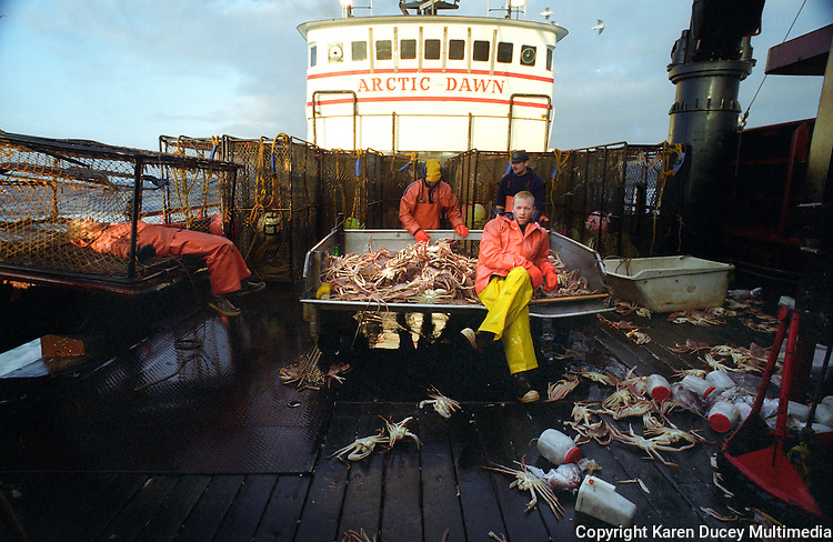 "Crewmen are exhausted on board the fishing vessel ""Arctic Dawn"" during an opilio crab fishing season in the he Bering Sea in January 1994.  Crewmen sort out the juvenile crab and females and throw them back into the sea as a way of preserving future stocks.  The Bering Sea is known for having the worst storms in the world.  Crab fishing in the Bering Sea is considered to be one of the most dangerous jobs in the world.  Bait jars with herring lie scattered on the deck. This fishery is managed by the Alaska Department of Fish and Game and is a sustainable fishery.  The Discovery Channel produced a TV series called ""The Deadliest Catch"" which popularized this fishery."