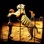Khris Allen, tiger trainer, wild animal specialist and performer, Sarasota, Florida.