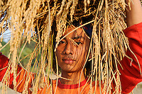 Bangladesh, Region Madhupur, Garo Jugendlicher bringt die Reisernte ein , Garos sind eine christliche u. ethnische Minderheit / BANGLADESD Madhupur, Garo boy carry rice crops after harvest, Garos is a ethnic and christian religious minority