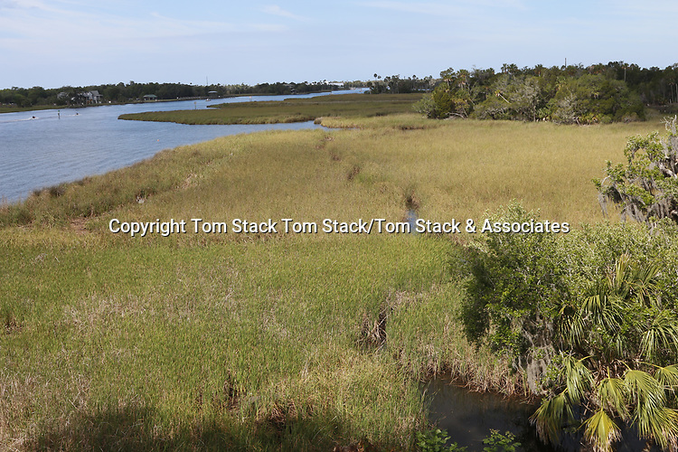 Salt marsh, Florida