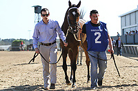 HOT SPRINGS, AR - March 18: Terra Promessa #2 is walked to the paddock before the Azeri Stakes at Oaklawn Park on March 18, 2017 in Hot Springs, AR. (Photo by Ciara Bowen/Eclipse Sportswire/Getty Images)