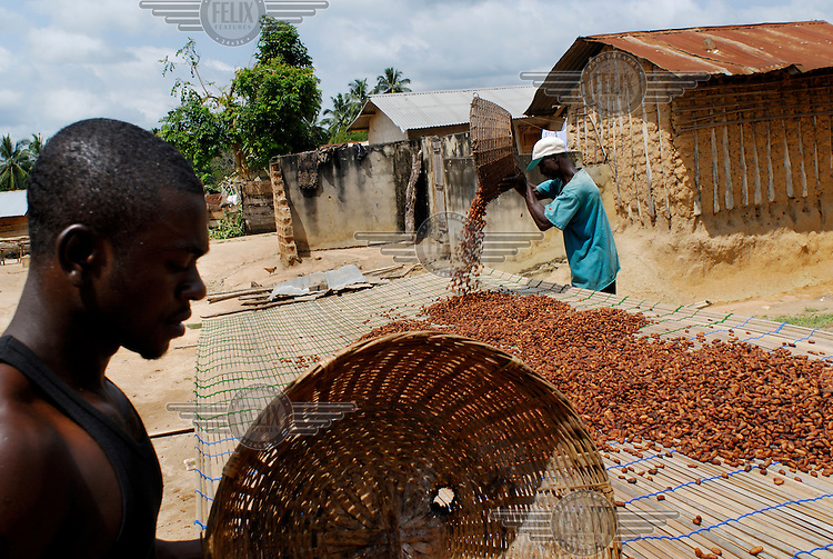 Elias Mohammed, in blue, Kuappa Kokoo's secretary, spreads out cocoa beans to dry in the sun. Kuapa Kokoo is a farmers' co-operative with 45,000 members spread across the forests of Kumasi. The farmers jointly own a 45 percent stake in the company, which is also a major stakeholder in the London-based fair trade company Divine Chocolate Ltd..