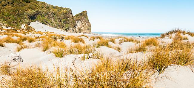 Native sand dune grass pingao on Three Mile Beach near Okarito, Westland Tai Poutini National Park, West Coast, UNESCO World Heritage Area, New Zealand, NZ