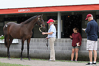 Hip #40 Empire Maker - Ticker Tape filly being inspected by trainer Todd Pletcher at the  Keeneland September Yearling Sale.  September 9, 2012.