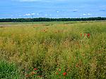 Łąki w okolicach Puńska.