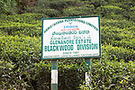 Glenanore tea estate sign, Blackwood Division, Haputale, Badulla District, Uva Province, Sri Lanka, Asia