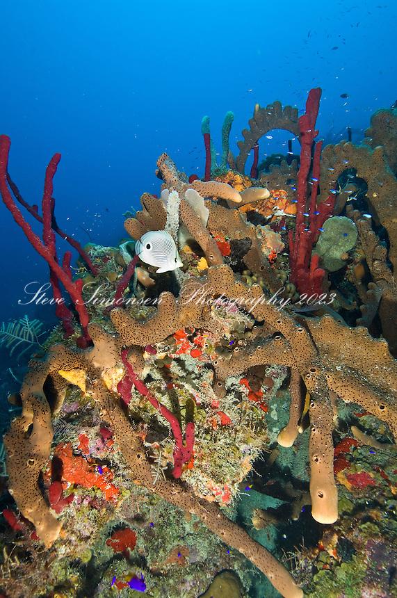 Underwater scenics at Pavillions, St. Croix, US Virgin Islands