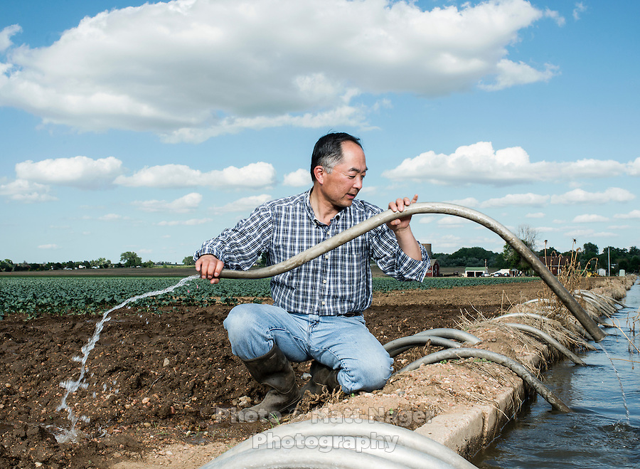 Owner of Sakata Family Farms, Robert Sakata adjusts siphon irrigation pipes on his farm in Brighton, Colorado, Thursday, June 19, 2015. Sakata Family Farms grows onion, barley, broccoli, sweet corn and cabbage.<br /> <br /> Photo by Matt Nager