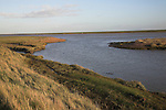 Marsh, reeds, and drainage channels of River Ore, inland of Orford Ness, near Shingle Street, Hollesley, Suffolk, England