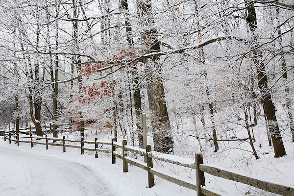 Snow Covered Trees, Fence And Walking Path Through The Forest During Winter In The Park, Sharon Woods, Southwestern Ohio, USA