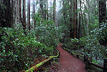 Trail at Armstrong Redwoods