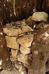 Judea, trunk of a Kermes Oak tree (Quercus Caliprinos) in Ein Kinia