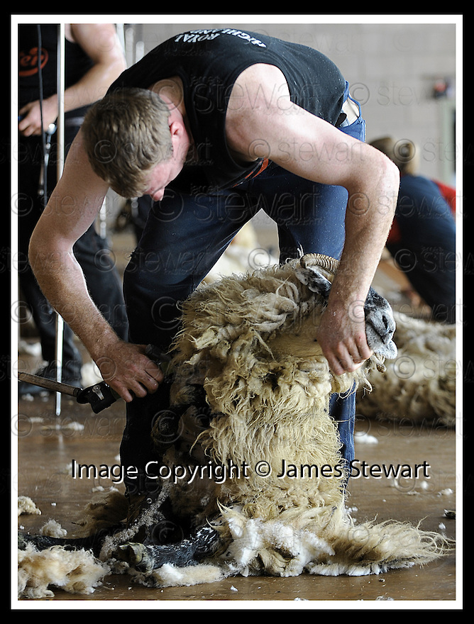 22/06/2008   Copyright Pic: James Stewart.File Name : sct_jspa07_sheep_shearing.HAMISH MITCHELL RETAINS HIS SCOTTISH CHAMPIONSHIP TITLE  AT THE ROYAL HIGHLAND SHOW, EDINBURGH......James Stewart Photo Agency 19 Carronlea Drive, Falkirk. FK2 8DN      Vat Reg No. 607 6932 25.Studio      : +44 (0)1324 611191 .Mobile      : +44 (0)7721 416997.E-mail  :  jim@jspa.co.uk.If you require further information then contact Jim Stewart on any of the numbers above........