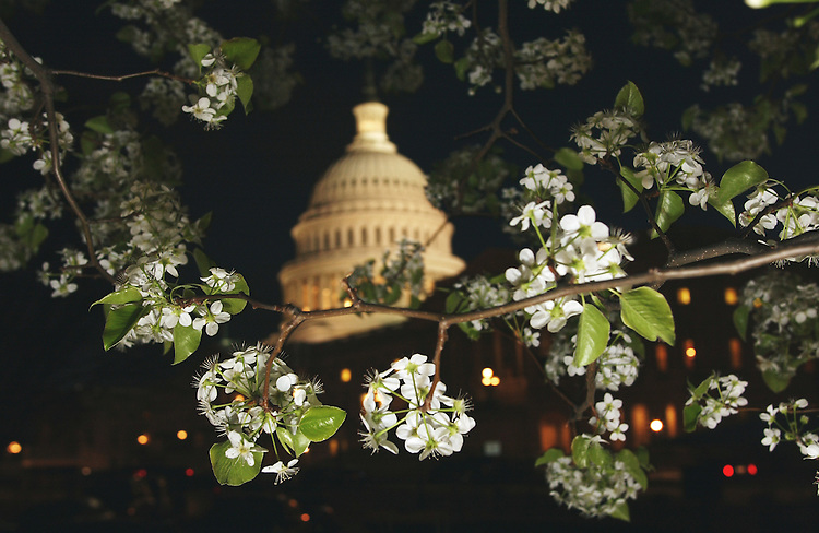3/21/02.U.S.CAPITOL--A tree blooms on the East Front of the U.S. Capitol..CONGRESSIONAL QUARTERLY PHOTO BY SCOTT J. FERRELL