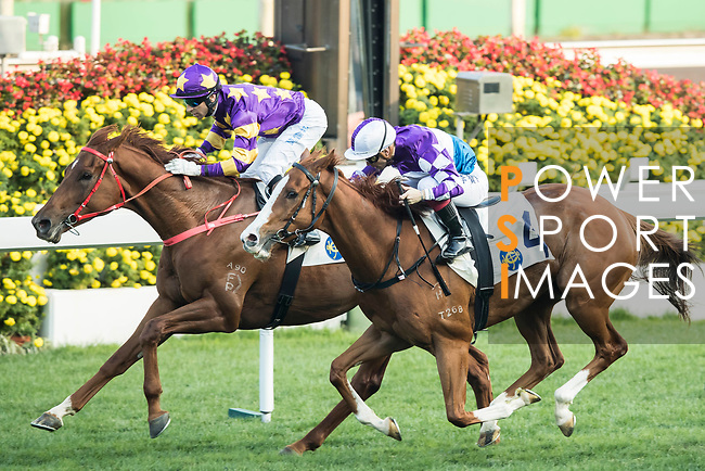 Jockey Joao Moreira (l) riding Western Express and jockey Umberto Rispoli (r) riding New Asia Sunrise compete during the Tolo Harbour Handicap as part of Hong Kong Jockey Club Horse Racing Season 2016-17 on 02 April 2017, at Sha Tin Racecourse in Hong Kong, China. Photo by Chris Wong / Power Sport Images