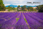 Marcello, LANDSCAPES, LANDSCHAFTEN, PAISAJES, paintings+++++,ITMCEO1011,#l#, EVERYDAY ,provence,lavender ,puzzles