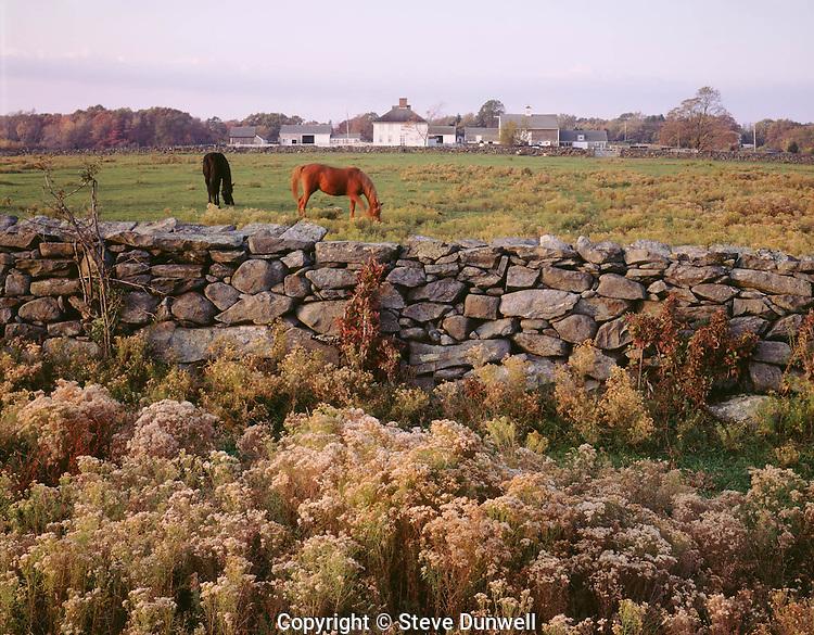 Casey farm, Kingston, RI stone wall + horses