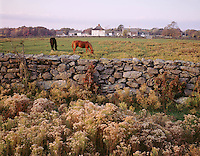 Casey farm, Kingston, RI stone wall + horses