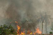 Xingu, Mato Grosso, Brazil. Fire burning through woodlands in the cerrados forest.
