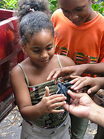 local children see leatherback sea turtle hatchlings, Dermochelys coriacea, Dominica, West Indies, Caribbean, Atlantic