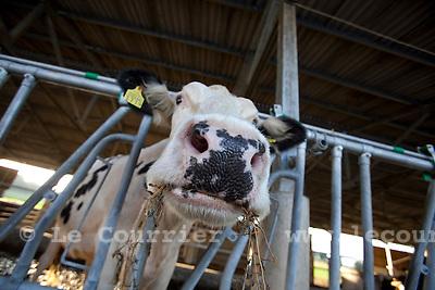 Genève, Meynier, le 29.09.2009.M. Marc Jaquet éleveur de vaches et producteur de lait qui est en grève. Il arrêtera bientôt sa production car celle-ci ne devient plus rentable suite aux baisses consécutives du prix du lait..© Le Courrier / J.-P. Di Silvestro