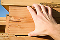 A close up of a hand touching a six by ten piece of lumber. model released