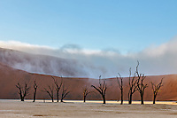 Fog in the famous Dead Vlei