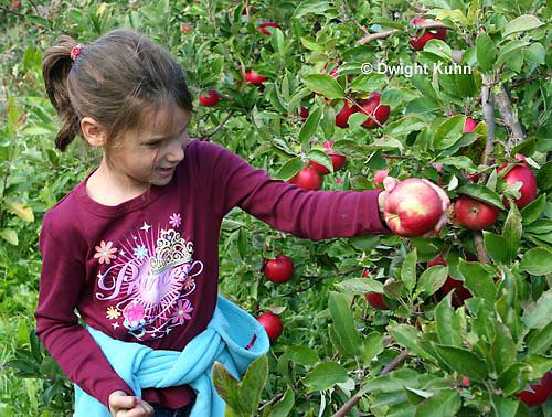 AT05-501z  Picking Apples, PRA