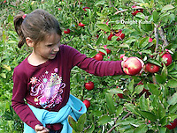 AT05-501z  Picking Apples, PRA