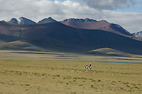 HORSEMAN AT NAMTSO LAKE